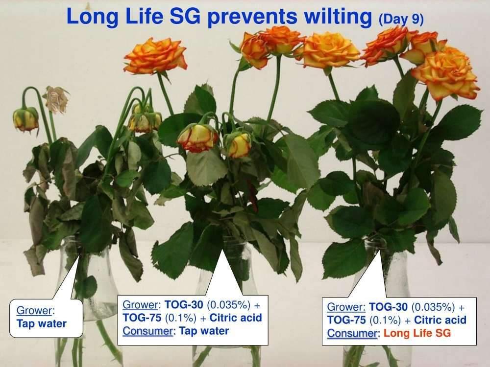 bao-quan-hoa-longlife 23