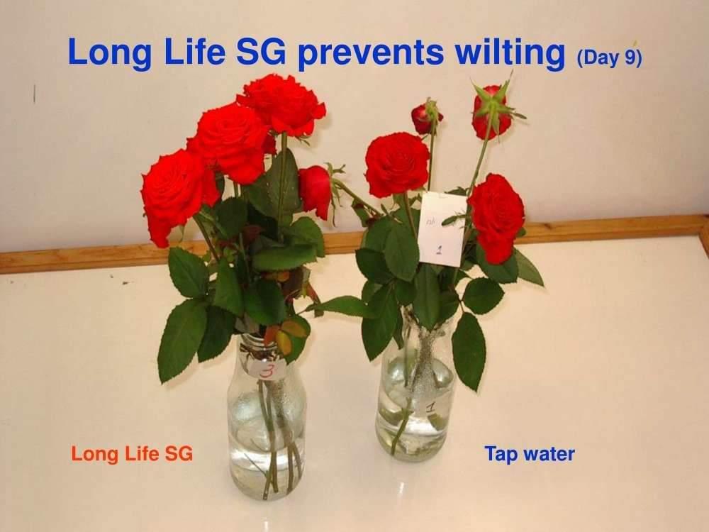 bao-quan-hoa-longlife 24