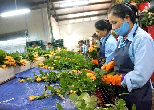 khu-xu-ly-hasfarm