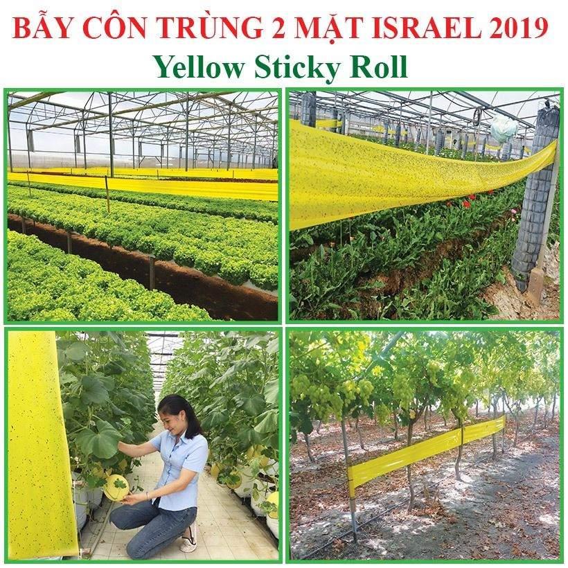 bay-ruoi-duc-bang-keo-bay-con-trung-vang-israel 10