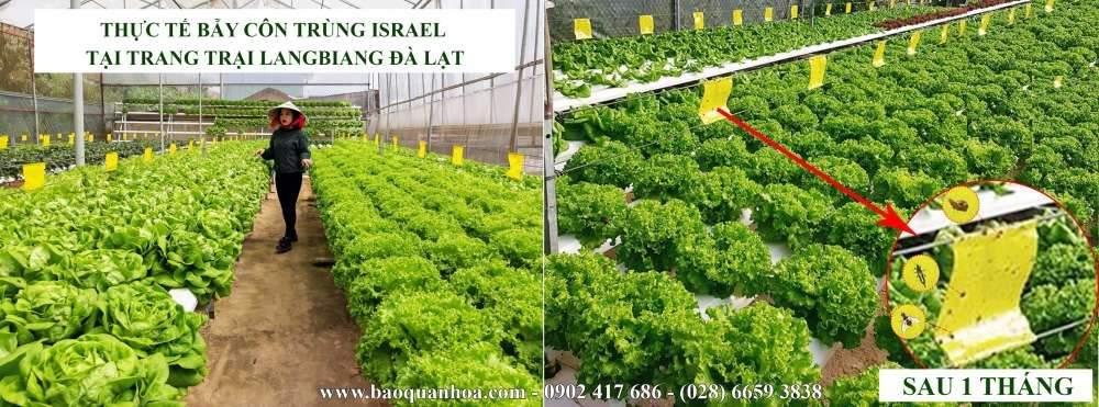 bay-ruoi-duc-bang-keo-bay-con-trung-vang-israel 5