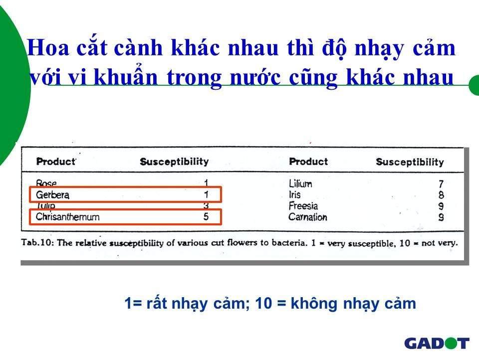 quy-trinh-bao-quan-hoa-cuc-kho-lanh-112114