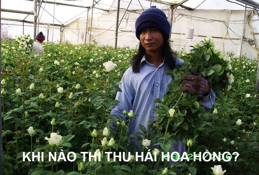 thu-hai-hoa-hong-thich-hop