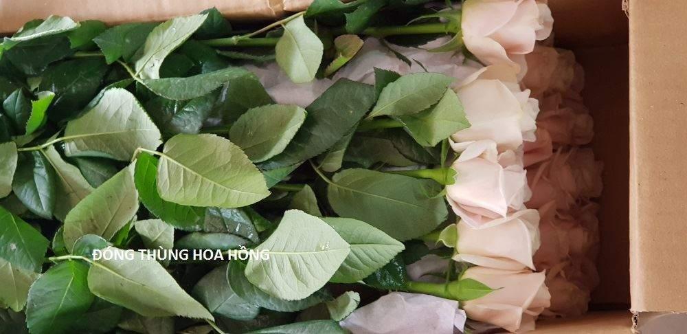 tu-van-xu-ly-hoa-hong-da-lat 4