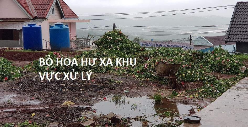 tu-van-xu-ly-hoa-hong-da-lat 5