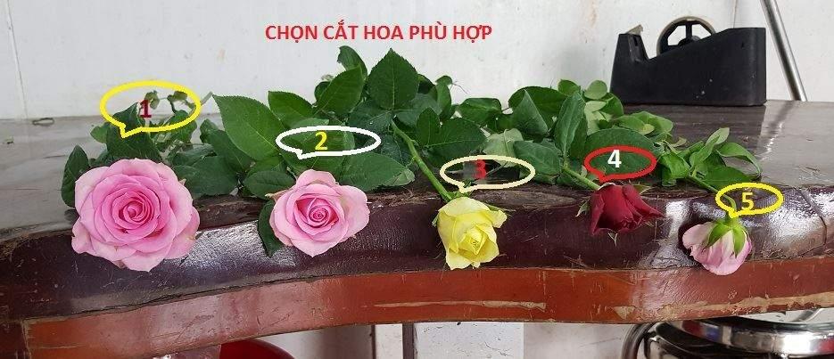 xu-ly-hoa-hong-da-lat 1